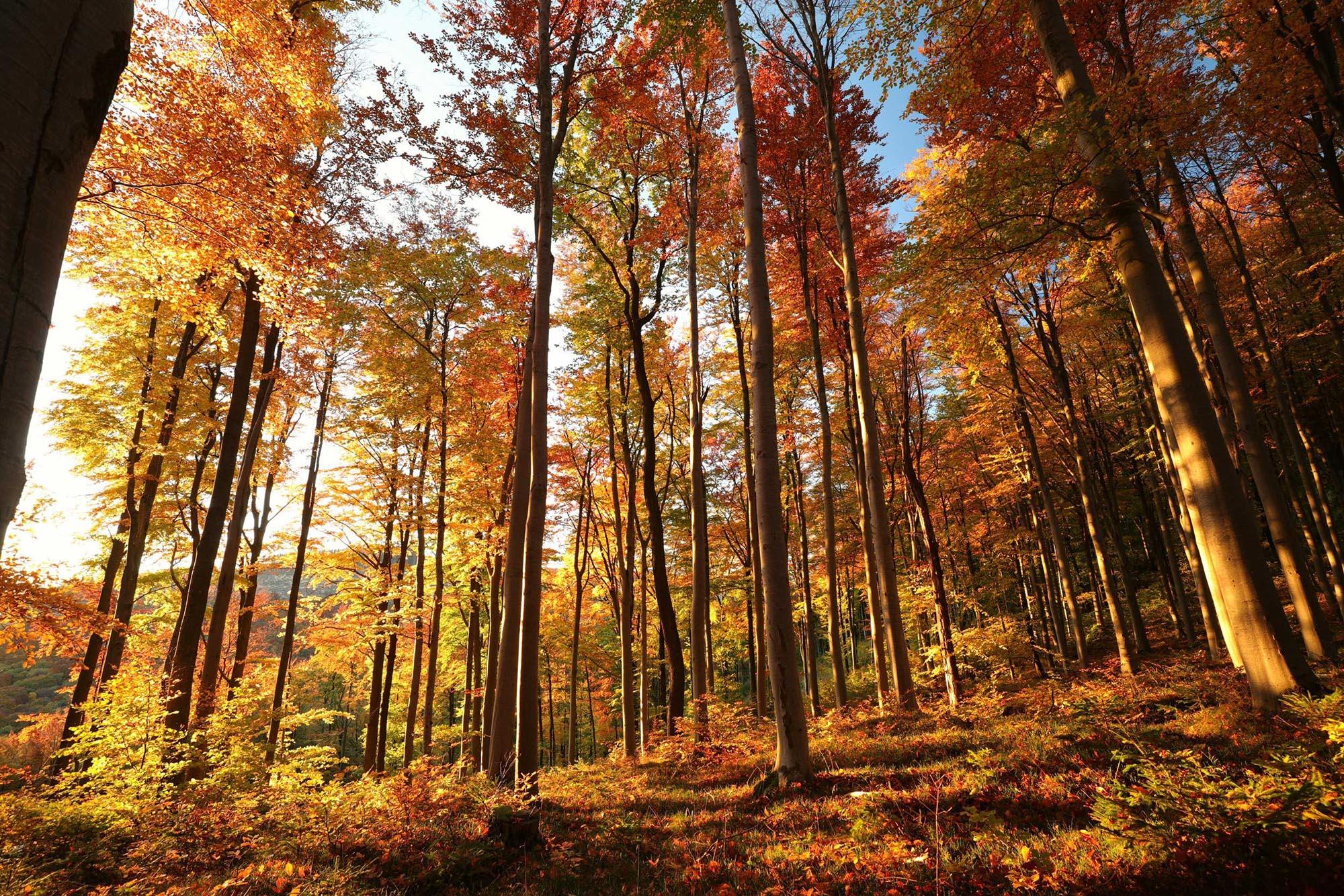 Nachhaltigkeit - Buchenwald