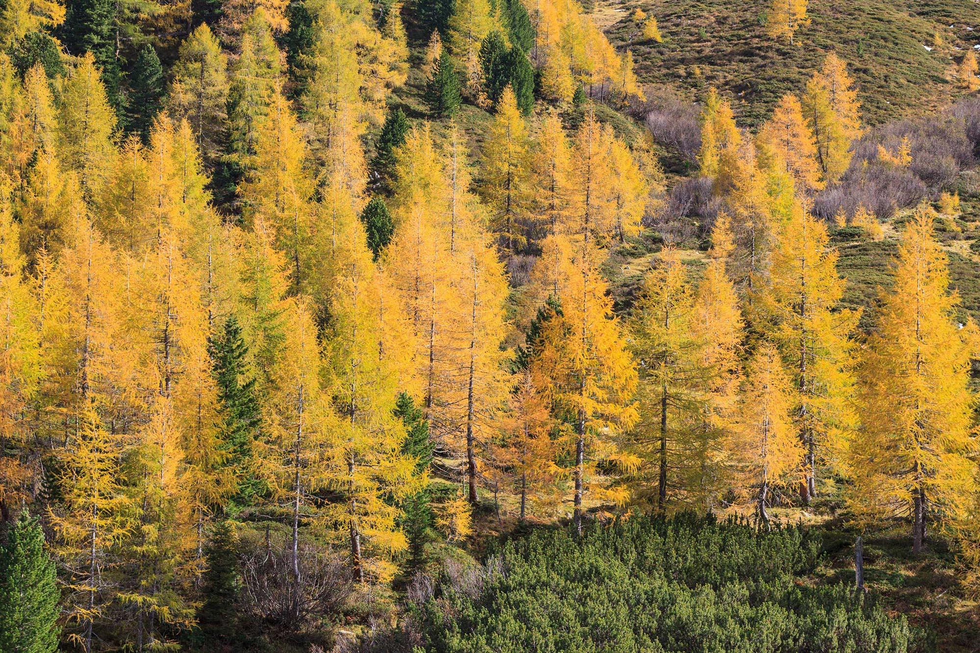 Nachhaltigkeit - Lärchenwald